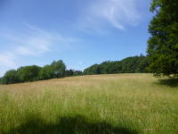 Odenwald Foto: Sommerwiese