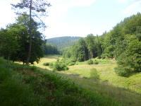 wald michelbach odenwald